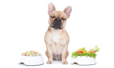 Chicken or Beef? Ernährungsberatung für Hund und Katz'.