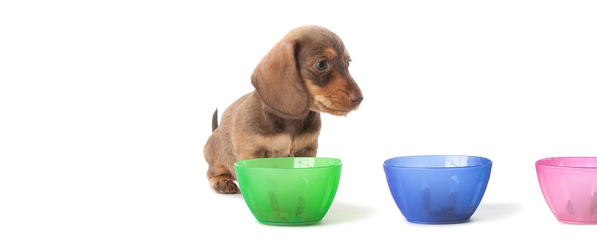 Wie oft was impfen? #2 Hund