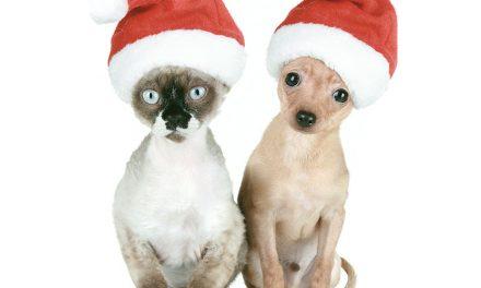 Vorsicht. Weihnachten.