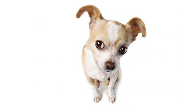 Impfen – grosser Schutz für kleine Tiere.