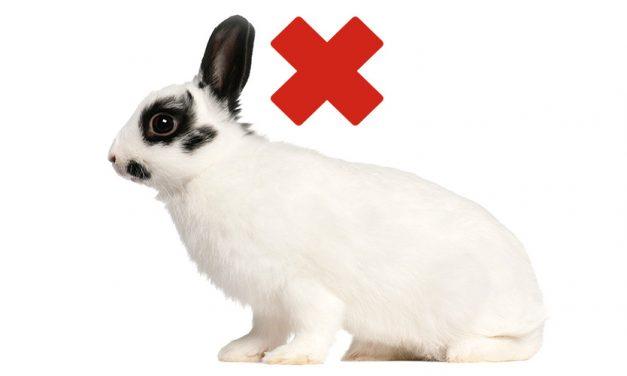 Schutz vor RHD-2 bei Kaninchen. <br>Impftermin am 14. Januar 2017.