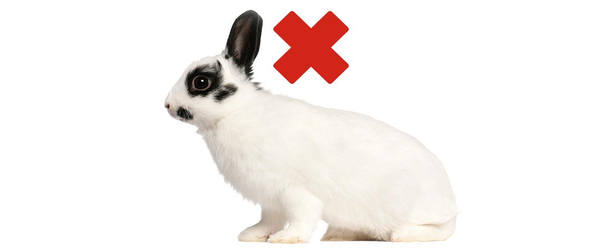 Schutz vor RHD‑2 bei Kaninchen. <br>Impftermin am 14. Januar 2017.