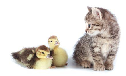 Schnell handeln. Vogelgrippe H5N8.
