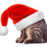 Öffnungszeiten Weihnachten 2018